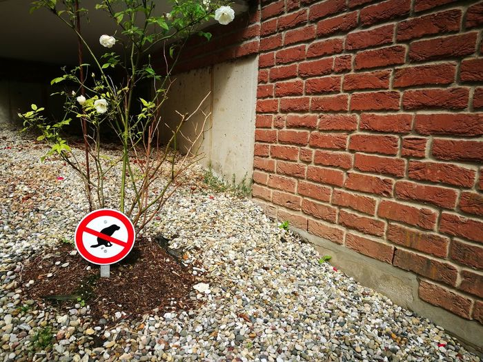 Prohibition sign in front of a brick wall to prevent dog dirt in Oerlinghausen near Bielefeld in Nordrhein-Westfalen Architecture Barker´s Egg Bielefeld Brick Wall Building Exterior Built Structure Dog Dog Dirt Dog Tird Dog-doo Dogs Forbidden Germany🇩🇪 Oerlinghausen Ostwestfalen Ostwestfalen-Lippe Outdoors Prohibition Prohibition Sign Red Shitty Shitzu Sidewalk Teutoburger Wald Warning Sign