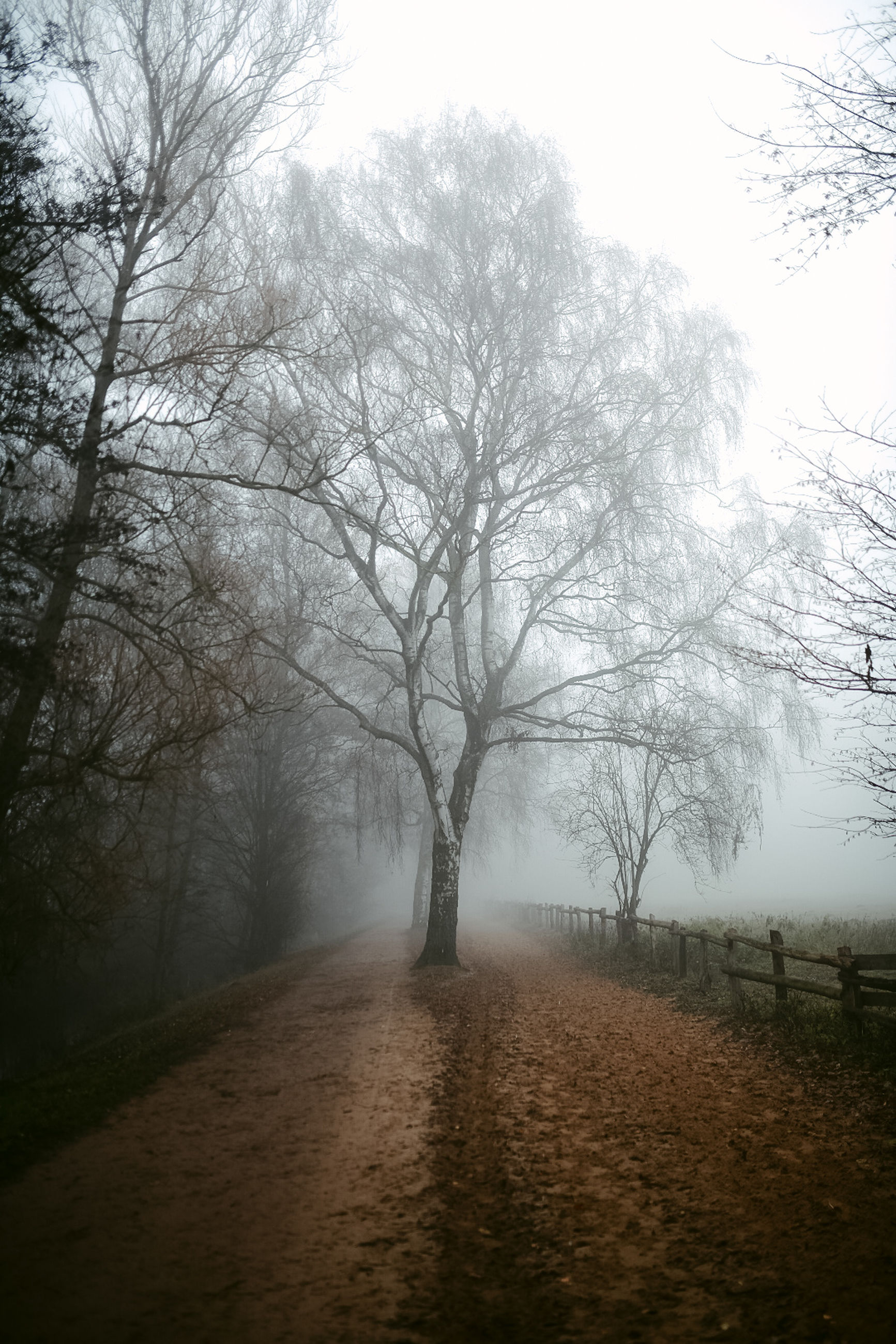 tree, fog, plant, tranquility, the way forward, beauty in nature, direction, tranquil scene, nature, scenics - nature, no people, road, non-urban scene, land, sky, day, bare tree, landscape, environment, diminishing perspective, outdoors, treelined