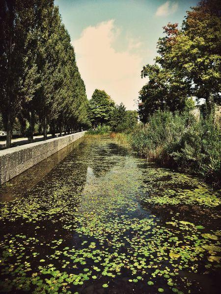 Netherlands Summer Nature Denbosch