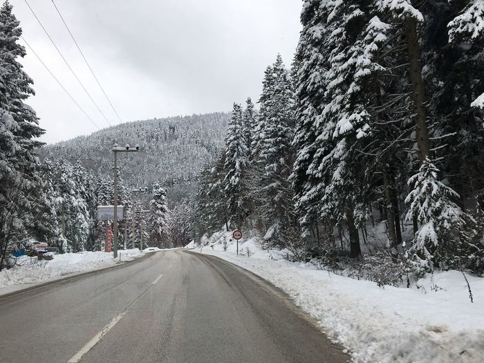 Winter Turkey