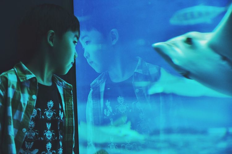 Boy Looking At Fish Swimming In Aquarium