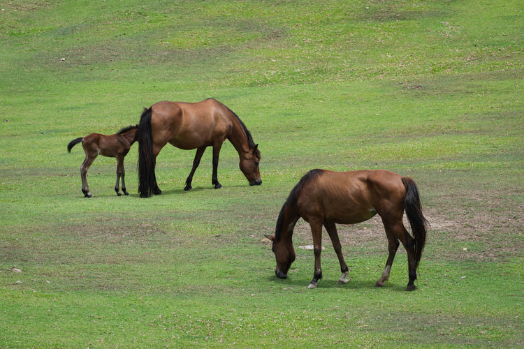 Horses grazing in a field