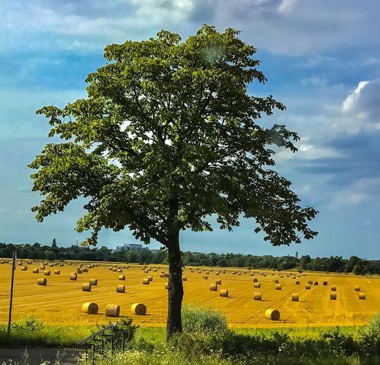 Tree Nature
