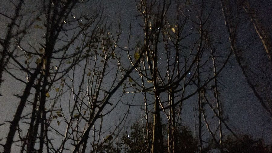 Low angle view of bare trees against sky at night