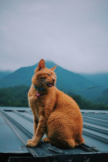 Meow Meow Taiwan Houtong Houtong Cat Village Cat Country Life Lovely Place
