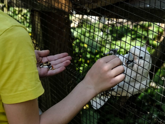 Midsection of woman feeding cockatoo