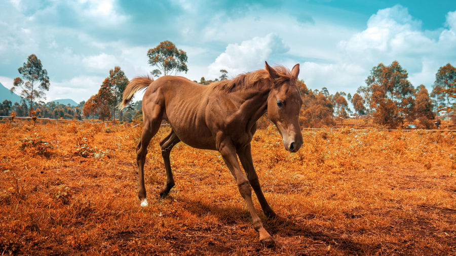 Horse standing in a field infrared