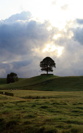 Copy Space Beauty In Nature Cloud - Sky Environment Grass Landscape Nature No People Sky Tranquil Scene Tranquility Tree