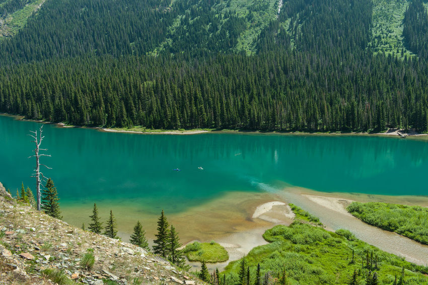Lake on Grinnel Glacier Trail Lake Glacier Turquoise Colored Boat Boating Beauty In Nature Tranquility Scenics - Nature Tranquil Scene Nature Mountain Outdoors Lush Foliage Tree Green Color Water Travel Destinations Travel Tourism Tourist Attraction  Tourist Destination Tourists Clean Calm Hiking