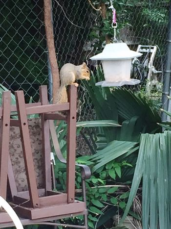 Caught this little guy stealing some bird seed Taking Photos Dallas Tx Carrollton Squirrel Eating Birdseed