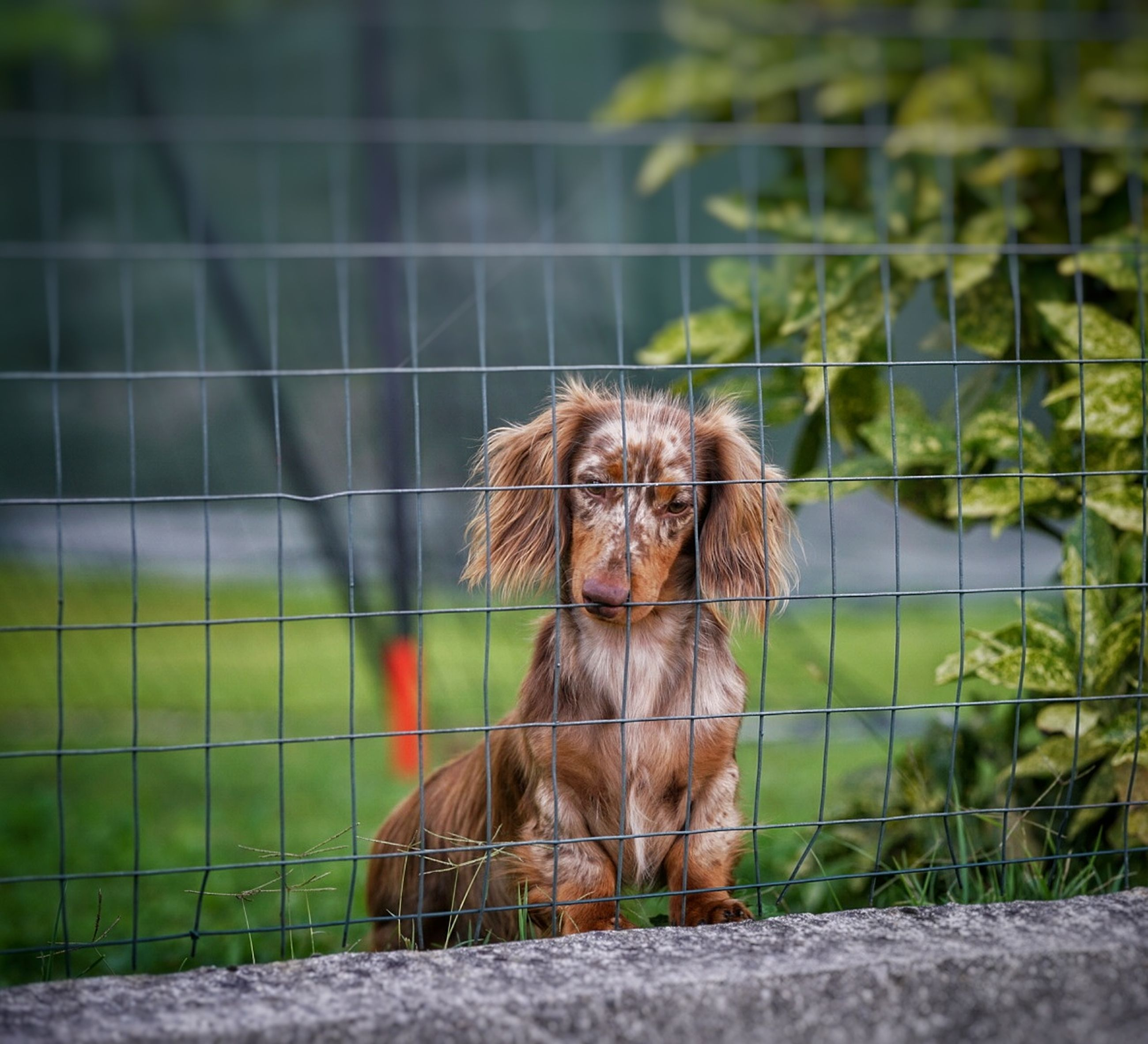 animal themes, one animal, animal, mammal, domestic, dog, domestic animals, pets, canine, vertebrate, focus on foreground, looking, no people, sitting, day, portrait, looking away, nature, selective focus, outdoors