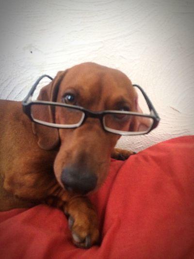 EyeEm Pets Doxies Hipster Jack Dachshund Hello World