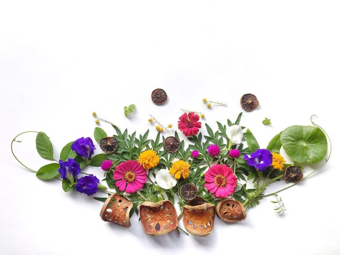 High angle view of multi colored flowering plant against white background
