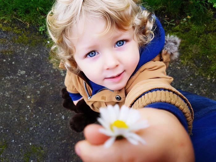 Portrait of cute boy holding daisy