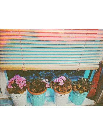 Free Time FlowerofLove Color Splash Enjoying Life