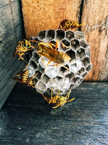 Outdoors APIculture Wasps🐝 Wasp's Nest. Wasp Close Up