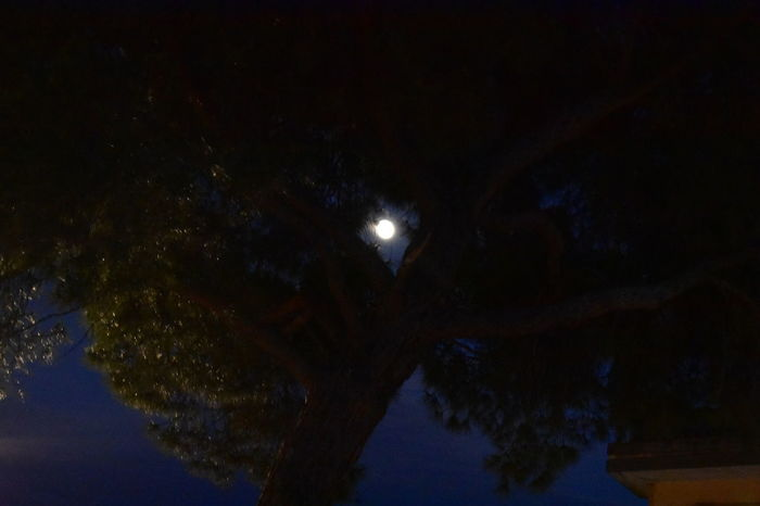 Tree Beauty In Nature Full Moon Growth Illuminated Low Angle View Moon Moonlight Nature Night No People Outdoors Pine Tree Planetary Moon Plant Scenics - Nature Sky Space Star - Space Tranquil Scene Tranquility Tree Tree Trunk Trunk