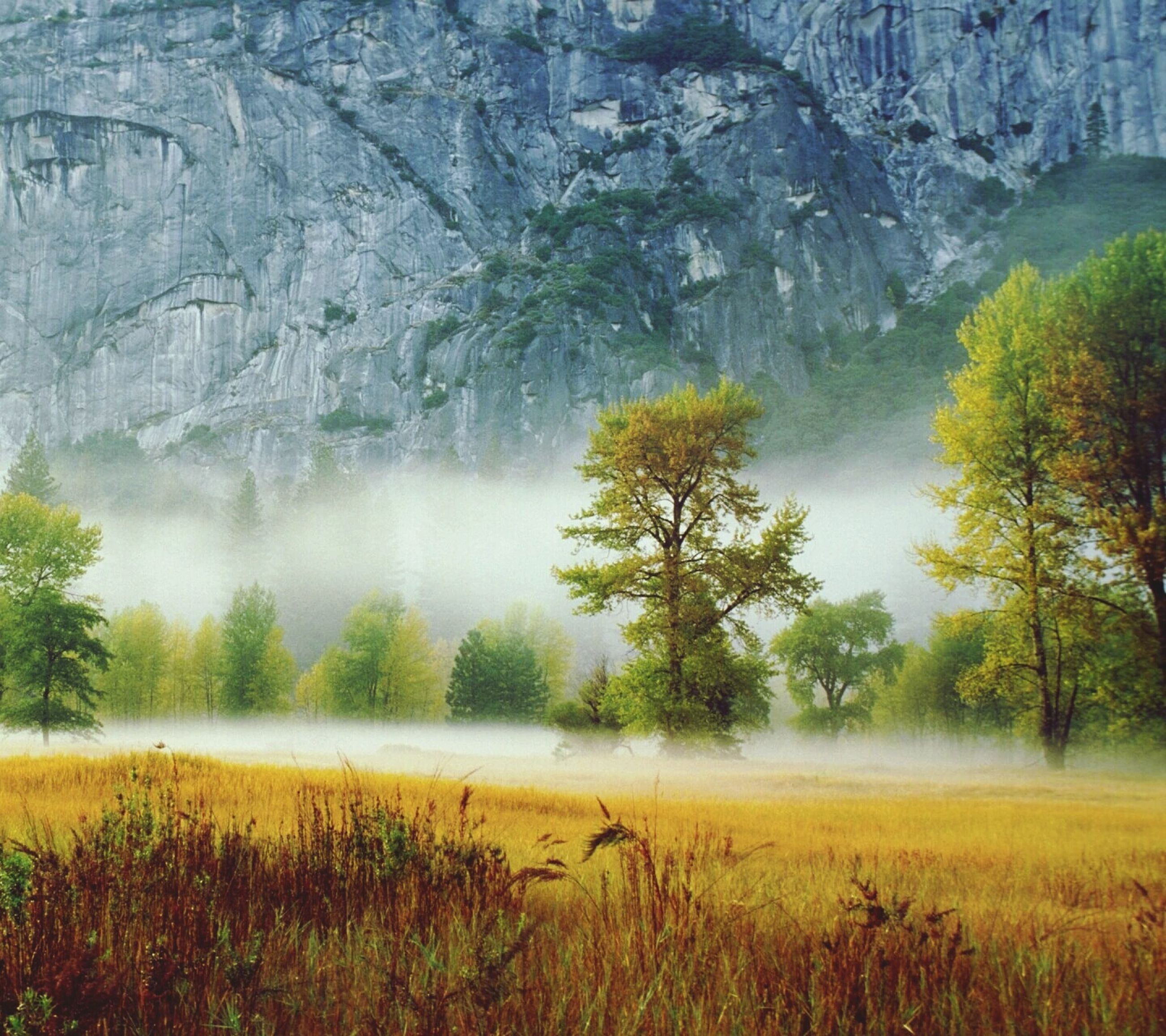 tranquil scene, tranquility, tree, scenics, beauty in nature, mountain, nature, landscape, non-urban scene, forest, growth, fog, idyllic, plant, lake, grass, water, day, remote, season