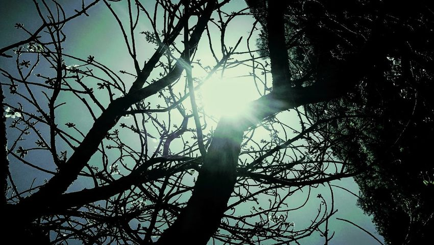 Low Angle View Tree Branch Nature Day Silhouette Sunlight