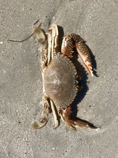 Animal Animal Themes High Angle View One Animal No People Land Animal Wildlife Sand Sunlight Animals In The Wild Close-up Nature Invertebrate Day Beach Vertebrate Directly Above Insect