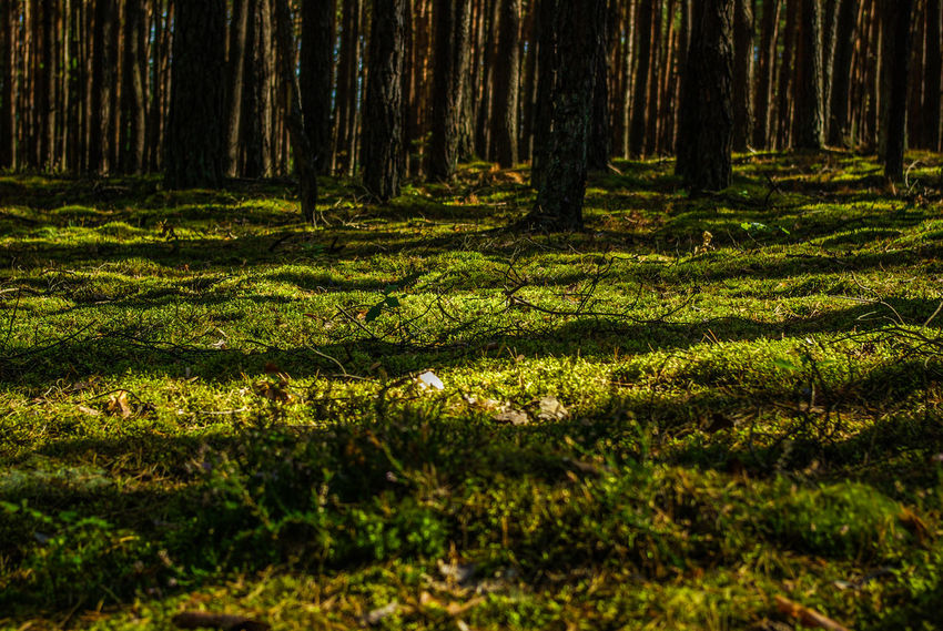 Beauty In Nature Dramatic Angles Forest Green Color Ground Growth Landscape Light Light And Shadow Moss Nature Nature Nature Photography Nature_collection Non-urban Scene Outdoors Remote Shadow Tranquil Scene Perspectives On Nature Tranquility Tree Tree Area Tree Trunk WoodLand The Secret Spaces
