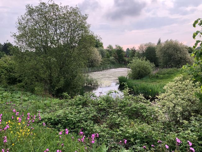 Varying the route to work today #commute #iphonex #pond #wildlife Plant Growth Flowering Plant Flower Beauty In Nature Nature Sky Green Color Tree Day Freshness No People Land Grass Cloud - Sky Fragility Sunlight Vulnerability  Field Tranquility
