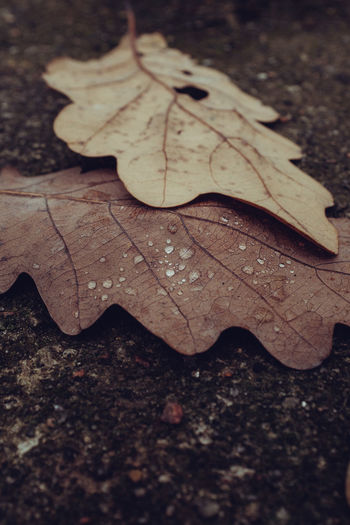 High angle view of raindrops on maple leaves