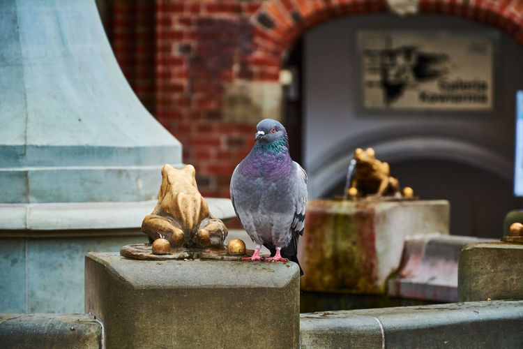 Cover your friend's back Torun, Poland Toruń Animal Themes Animal Wildlife Animals In The Wild Architecture Beak Bird Building Exterior Close-up Day Nature No People One Animal Outdoor Photography Outdoors Perching Starówka