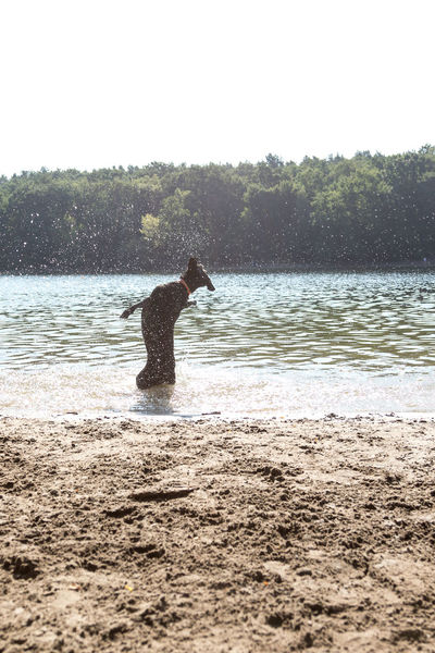 Animal Animal Themes Beach Beach For Dogs Beauty In Nature Clear Sky Day Domestic Animals Jumping Dog Lake Land Mammal Motion Nature One Animal Outdoors Pets Sky Splashing Tree Vertebrate Water