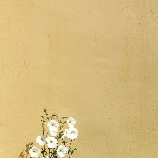 Close-up of flowers against wall