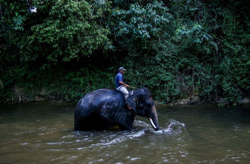 "A nature guide rides an elephant in a river near the National Elephant Conservation Centre outside Kuala Lumpur on March 1, 2016. Photo by Samsul Said Kuala Lumpur Malaysia  ""The Photojournalist - 20I6 EyeEm Awards"""
