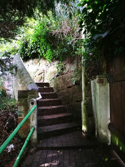 Steps And Staircases Steps Staircase Stairs The Way Forward Tree Plant Growth Steps And Staircase Railing Entrance Day Branch Outdoors Leading Stone Material Stairway Green Color Stone Handrail  England In Autumn Stairway To Nowhere Bridgnorth