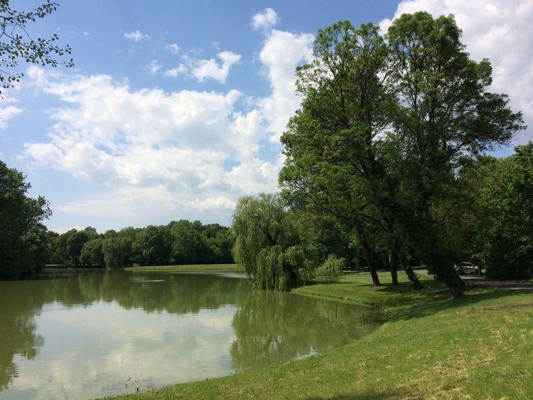 Lake Tree Trees