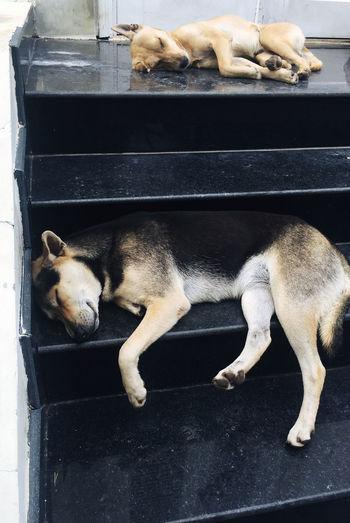 Dogs sleeping on steps