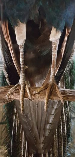 AntiM Wildlife & Nature Animal Themes Beauty In Nature Bird Bird Legs Birds Close-up Day Mammal Nature No People One Animal Outdoors Tree Wildlife Perspectives On Nature