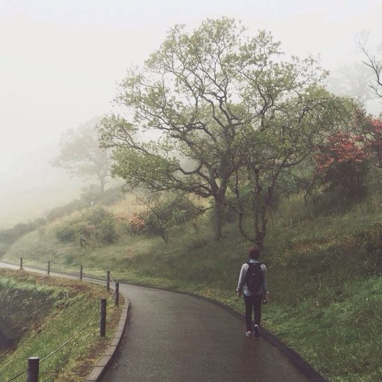 So why don't we go, somewhere only we know Mist Foggy Tree First Eyeem Photo