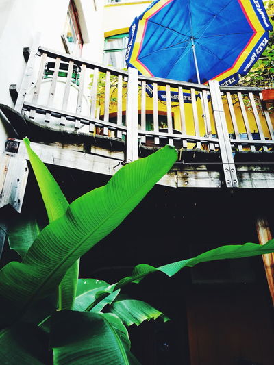 Still Life Vscocam Mobilephotography VSCO Eye4photography  Taking Photos Plant Umbrella Balcony Leaves Leaf The Week On EyeEm