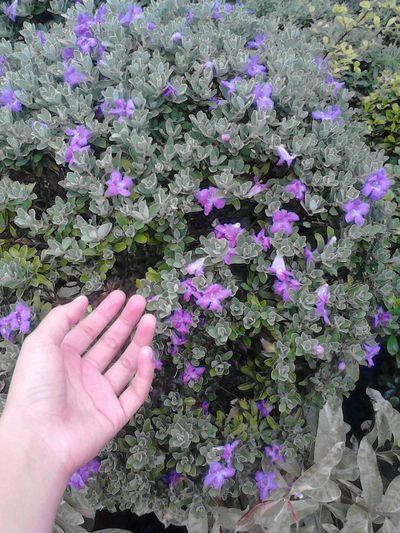 """Purple flower"" Flower God's Creation Hello World ✌ Popular Photos Flower Collection Beautiful"