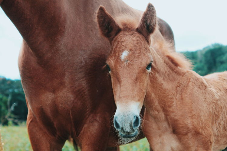 Vscocam Horses Mare Foal The Minimals (less Edit Juxt Photography) Market Reviewers' Top Picks