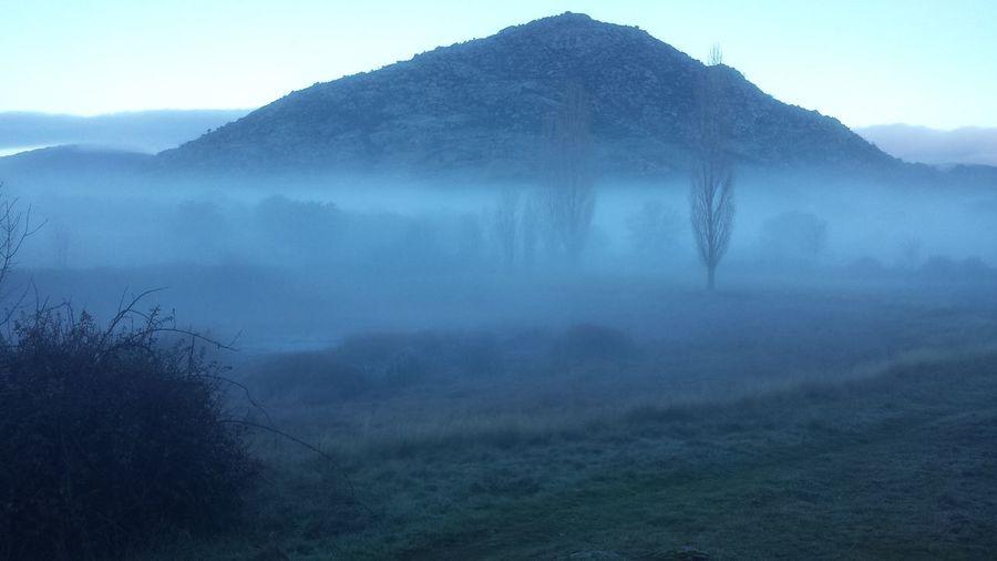Trees on misty landscape