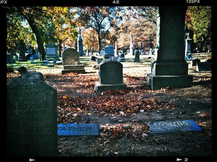 Foliage Cemetery Brooklyn Clara Filter