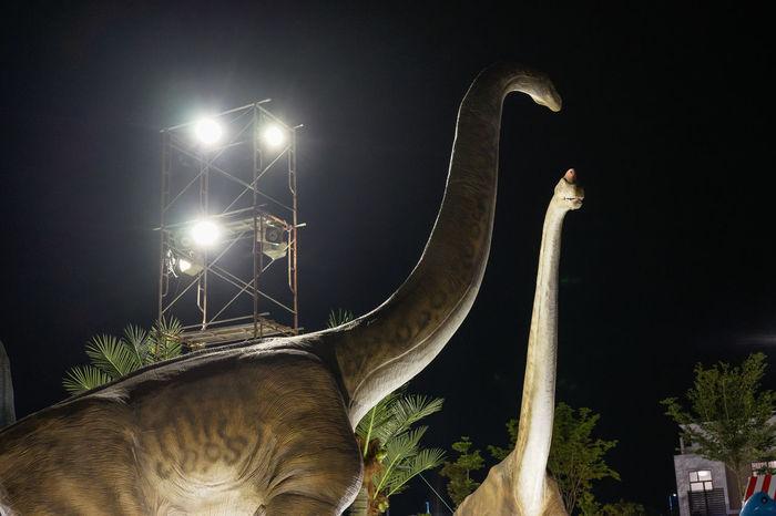 Dinosaur alive at night Ancient Fossil Jurrasic JurrasicWorld Monster TRex  Triceratops Brachiosaurus Carnivore Dinasour Extinct Lost World Omnivore Park Repetition Scary Stegosaurus Theme Park Tyrannosaurus Wild Life