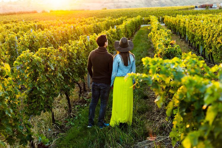 Rear view of people in vineyard