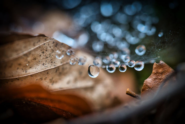 Close-up of raindrops on rotten leaf