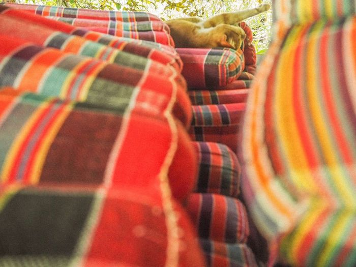 Animal Thailand Thailand Photography ASIA Photo Cat Multi Colored Textile Pattern Backgrounds Full Frame No People Blanket Day