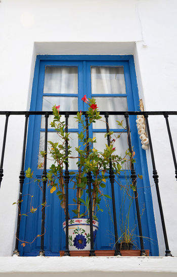 Ceramic Pot Balcony Railing Blue Building Building Exterior Built Structure Bunch Of Garlic Day Flower Flower Pot Flowering Plant Freshness Glass - Material Growth House Iron Bars Low Angle View Nature No People Outdoors Plant Potted Plant Residential District Window Window Box