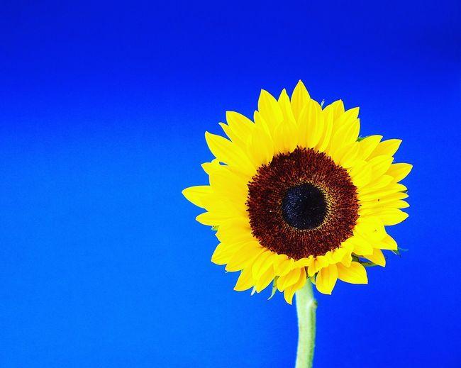 Lovenature #colornature #ig_flowers_world #macro_perfection #naturalbeauty #picoftheday #love #yellow #amazing #sunflowerlove #bestflowerspics #bestsunflower #sunflower #sunflowers #macro_kings #macro_clique #macroworld_tr #macrophotography #macro_brillia