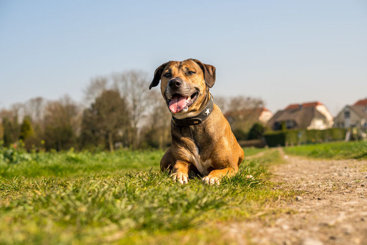 Animal Themes Day Dog Grass Nature No People One Animal Outdoors Pets