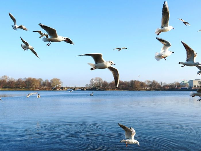 Seagulls flying over lake against sky