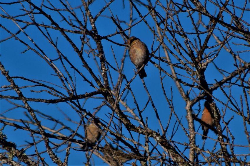 Animal Themes Animal Wildlife Animals In The Wild Bare Tree Bird Branch Low Angle View No People Perching Tree Vertebrate